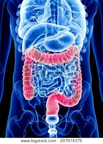 3d rendered medically accurate illustration of colon