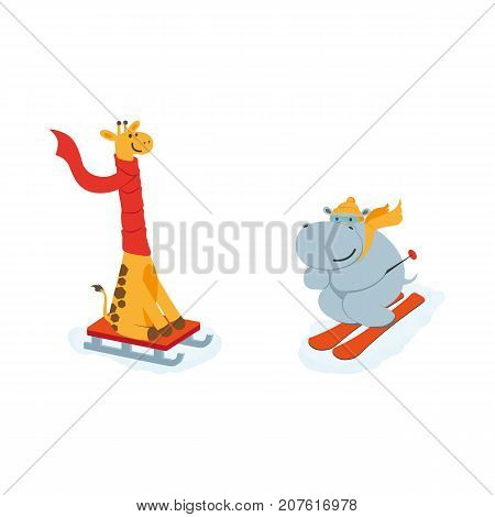 vector flat cartoon funny hippo character having fun mountain skiing, giraffe sledding smiling wearing cap scarf. Winter animal outdoor activities concept. Isolated illustration on a white background