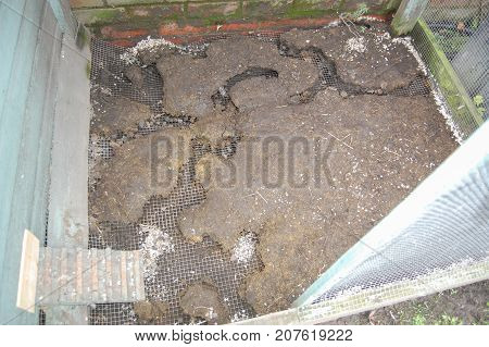 Rat runs under an aviary floor. Top surface layer has been removed exposing the weld mesh wire buried in the ground. Rats have burrowed under it and chewed through the wire.