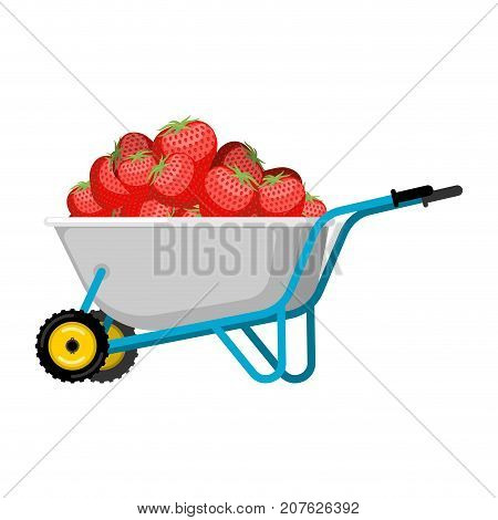 Wheelbarrow And Strawberry. Red Berry In Garden Trolley. Big Harvest Vector Illustration