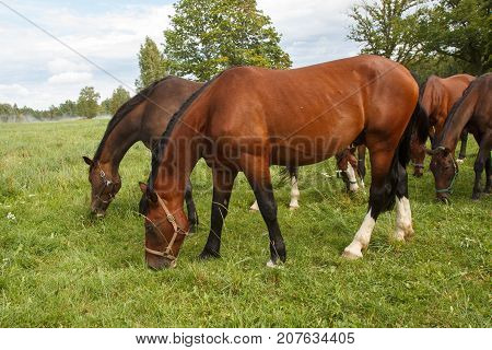 group of horses eating grass in the meadow