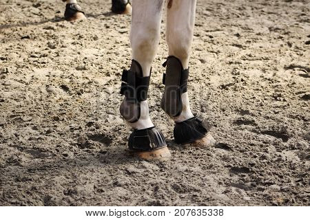 leather protections for legs and balls of anterior and posterior horses set up with hoof bell