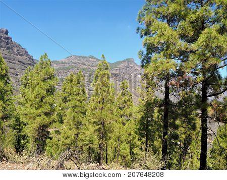 Mountains and pine trees between San Bartolome and Cruz Grande, Gran Canaria