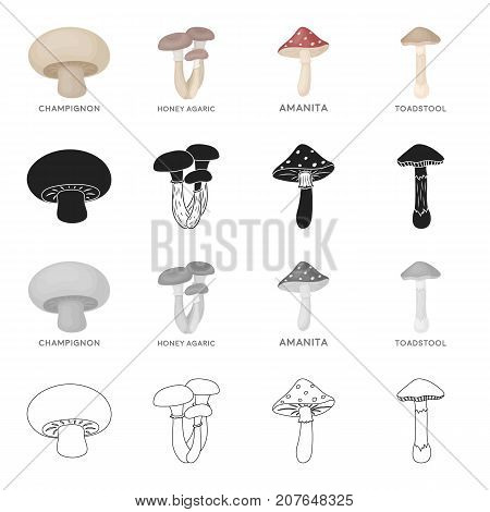 Delicacy, nature, ecology and other  icon in cartoon style. Forest, food, seasoning, icons in set collection