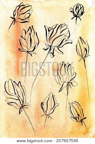Peony flower line hand drawn sketch. Floral plant botany element. Contour illustration on watercolor.