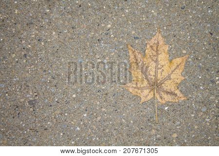 A lonely yellow leaf on a gray asphalt.