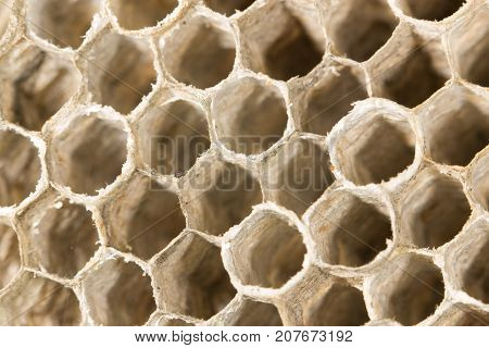 honeycomb as background . Photo of abstract background