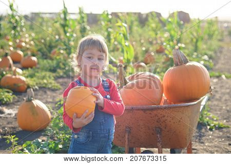 Little girl in jeans overalls holding pumpkin standing near vintage wheelbarrow at the farm field patch