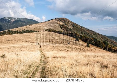 autumn mountain meadow on Kecka mountain ridge Kozi chbat hill with colorful forest in Starohorske vrchy mountains and Prasiva hill in Nizke Tatry mountains near Donovaly resort in Slovakia during autumn
