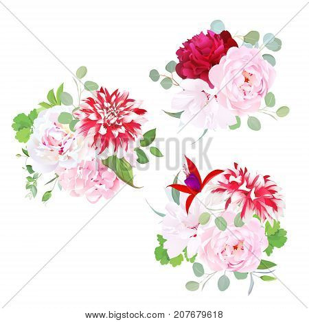 Garden delicate bouquets vector design objects. Pink roses, burgundy red peony, hydrangea, motley dahlia, white layered hibiscus, fuchsia, eucalyptus. All elements are isolated and editable