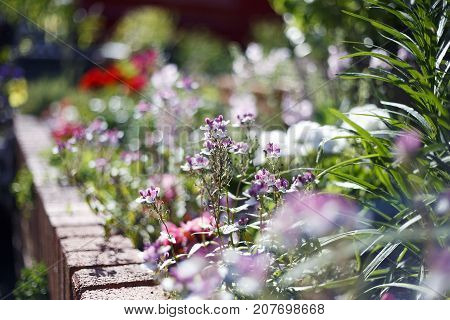 Cottage garden flowerbed with summer flowers in bloom with selective focus creating a dreamy effect