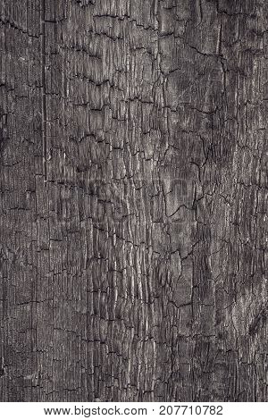 Burned Wood Vertical Texture