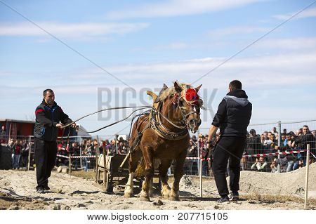 Horse Heavy Pull Tournament