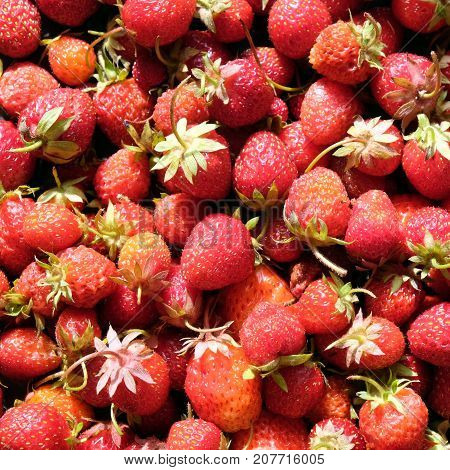 red appetizing ripe strawberries fruits as background top view closeup