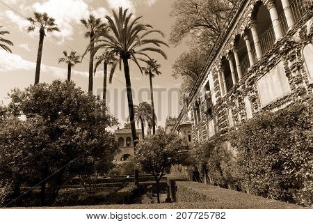 Spanish garden, lush garden palmtree and architecture