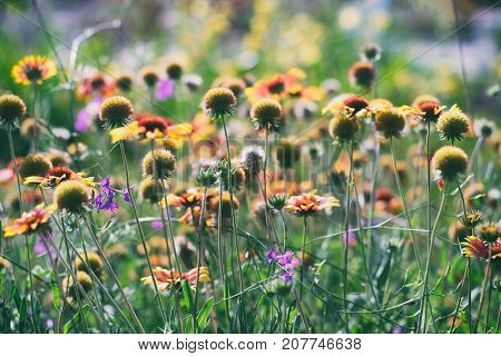 Vintage photography of flowers in garden in sunny day