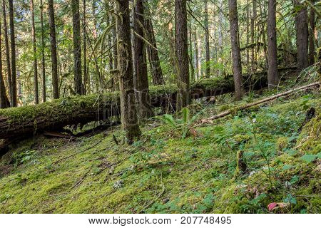 Moss Takes Over Oregon Forest