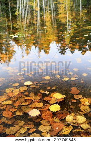 Golden autumn leaves in water and tree reflections in background