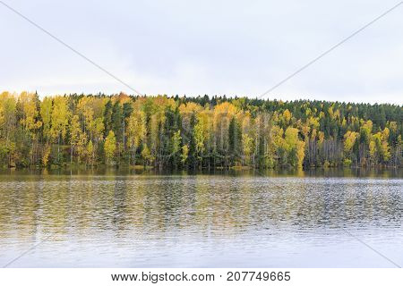 Autumn forest full of colors at lake shore