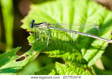 Small Dragonfly Sitting On A Green Leaf