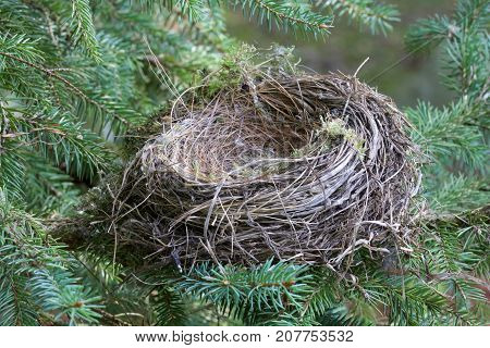 An empty birds nest.  The baby birds have hatched and flown away.  Empty nester parents can feel sad and lonely when their children grow up and leave the family home.