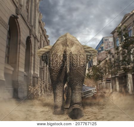 Elephant walking to a car in the city. Car avoids the elephant.
