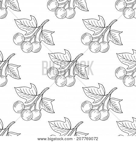 Kukui nut tree (Aleurites moluccana). Nuts, plant, berry, fruit natural organic butter ingredient. Hand drawn ink sketch illustration. Treatment, cosmetics, food ingredient. Isolated. Seamless pattern