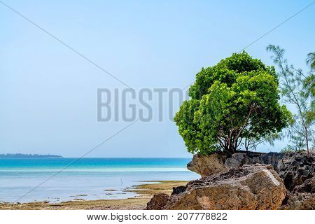 Beach landscape with solitary tree on cliff on Prison Island, Zanzibar