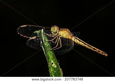 macro photo of dragonfly on the leaf