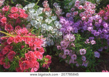 Multi-colored Decorative Flowers On Sunlight