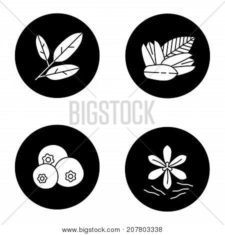 Spices glyph icons set. Bay leaves, pistachio, allspice, saffron. Vector white silhouettes illustrations in black circles