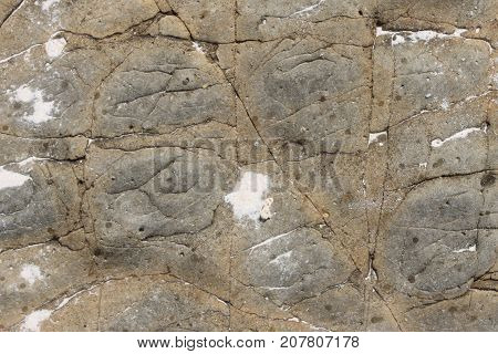 The stone texture is light colored with cracks and bumps