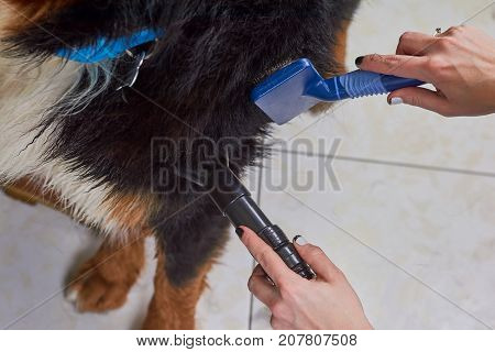 Dog grooming macro, female hands. Pet hair dryer, slicker brush.