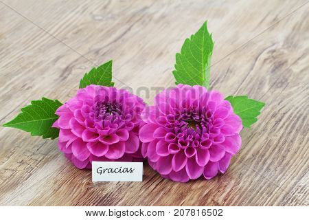 Gracias (which means thank you in Spanish) with two pink dahlias