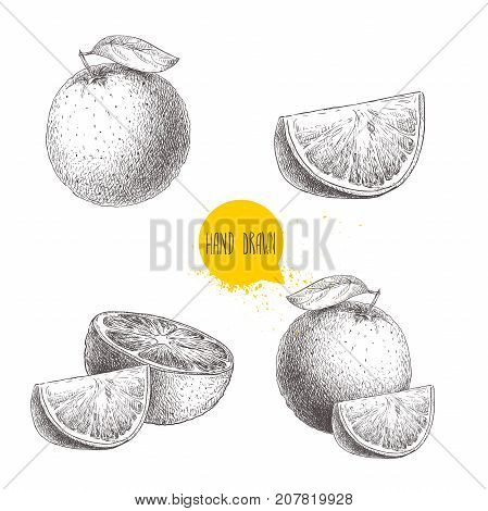 Hand drawn sketch style orange fruit compositions set. Whole fruit and slices. Vector citrus fruit illustration isolated on white background.