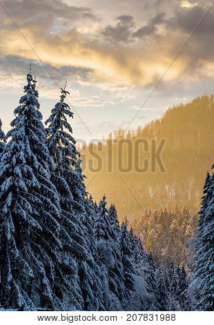 Snowy Spruce Forest At Gorgeous Sunset