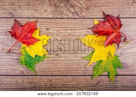 Autumn leaf life cycle. Autumn background with colorful fall maple leaves on rustic wooden table. Life cycle of fall leaf. Thanksgiving holidays concept. Green, yellow and red autumn leaves. Top view.