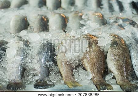 Fresh Fishes On Ice At The Fish Seafood Market