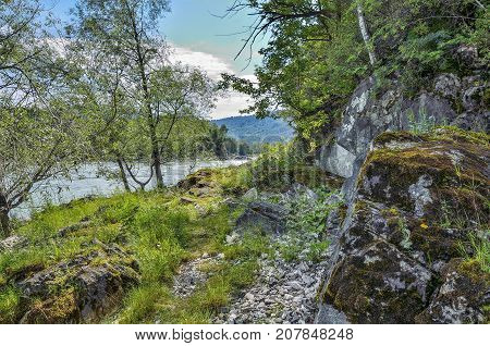 Summer landscape on the rocky bank of rapid siberian river Katun boulders from limestone with moss covered dense forest on both banks Altai mountains Russia