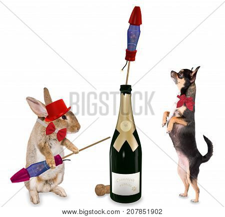 Cute bunny play with fireworks rockets for party with cute chihuahua dog