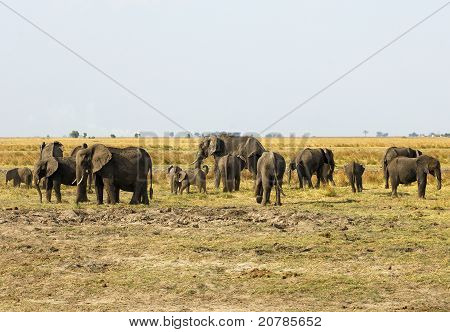 Herd of elephants