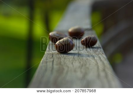Acorns on a wooden railing on a green background