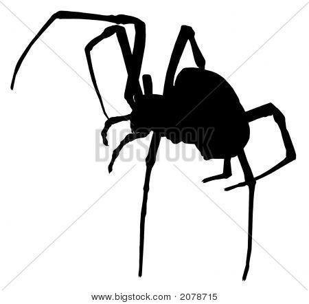 Creepy Spider Silhouette