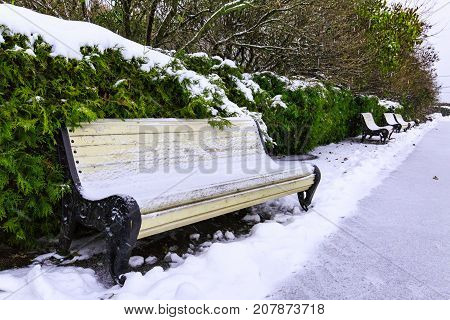 Benches and coniferous shrubs under snow along alley in city park on overcast winter day. Winter city view.