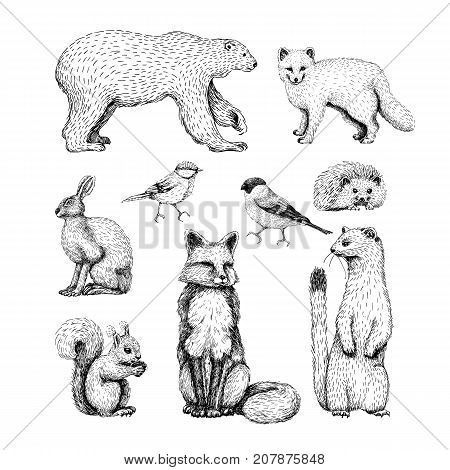 Small animals drawings set on grey background with hare, hedgehog, puppy, squirrel, badger, raccoon
