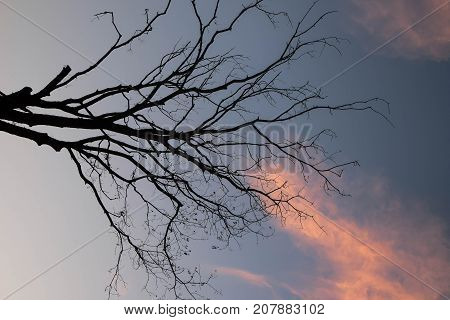 Shadow of the tree with the sky at the sunset time. feeling dramatic zone.Blue and orange sky.