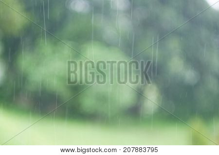 Heavy rain drops fall continuously in the forest rainy season.