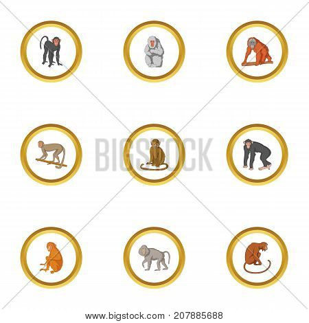 Monkey icons set. Cartoon style set of 9 monkey vector icons for web design