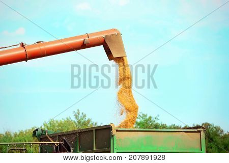 Combine harvester pouring grains outdoors