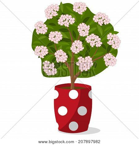 Flowering sapling in pot, isolated on white background. Vector illustration